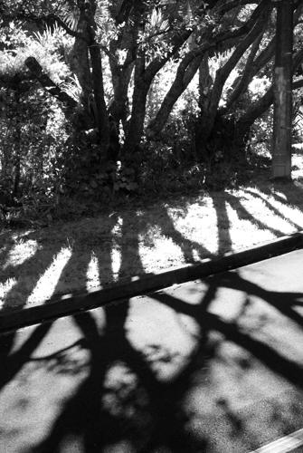 Tree Spokes