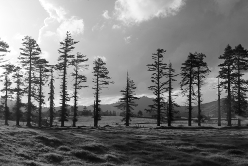Tree Mountain Range